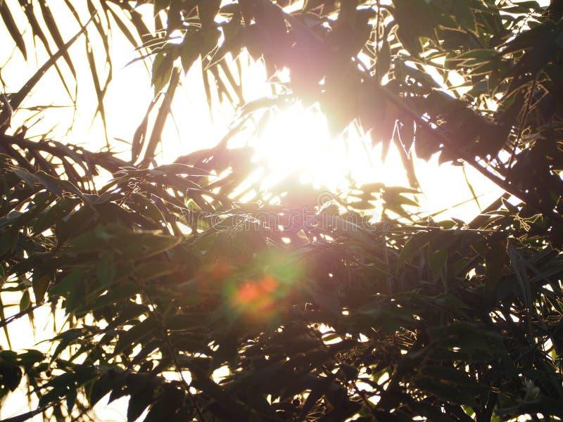 Härligt av ljus av solsken royaltyfri foto