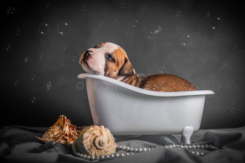 Härligt badar valpen i badrummet arkivfoto