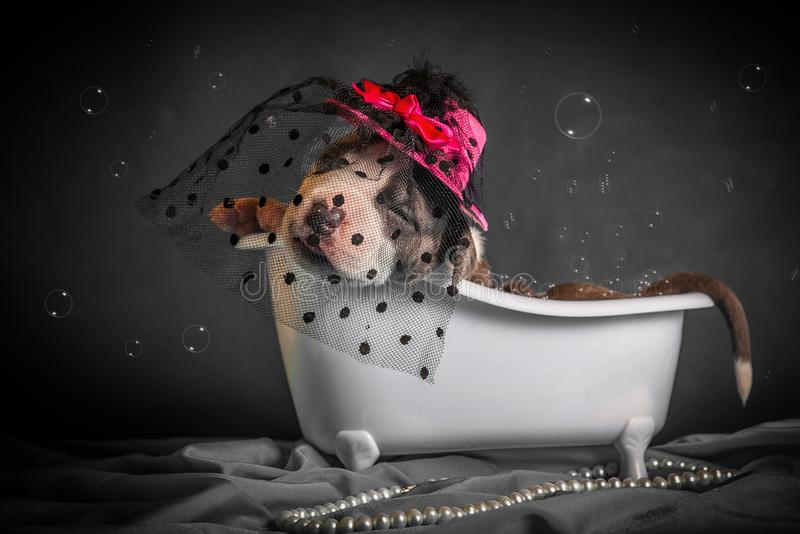 Härligt badar valpen i badrummet royaltyfria foton