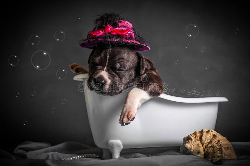 Härligt badar valpen i badrummet royaltyfri bild