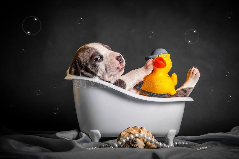 Härligt badar valpen i badrummet arkivbilder