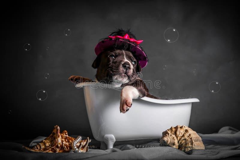 Härligt badar valpen i badrummet arkivbild
