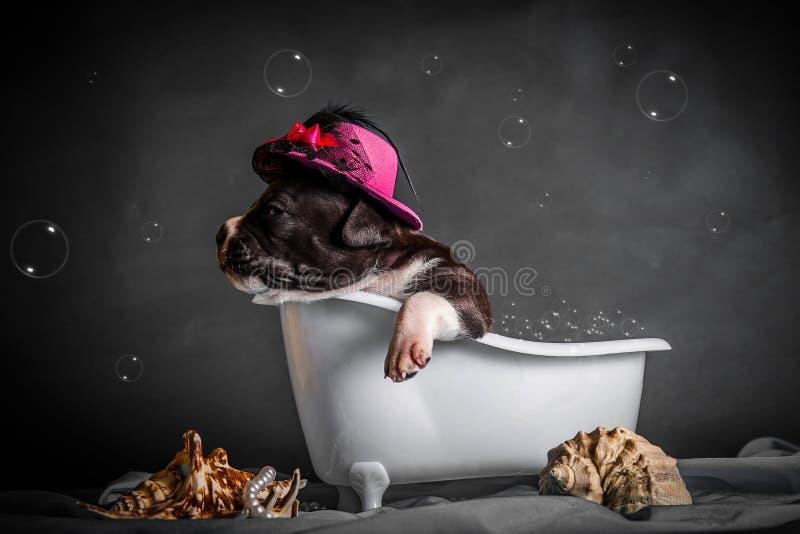 Härligt badar valpen i badrummet royaltyfri fotografi