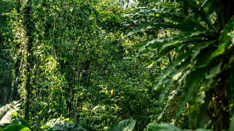 Härligt bergskoglandskap i Taiwan Sikt av skönhetnaturlandskapet royaltyfria foton