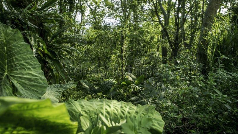Härligt bergskoglandskap i Taiwan Sikt av skönhetnaturlandskapet arkivfoto