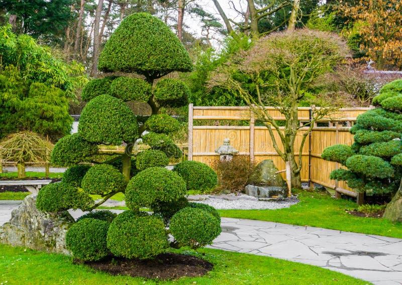 Härligt beskurit träd i en japansk trädgård, topiarykonstformer som arbeta i trädgården i asiatisk tradition royaltyfri foto