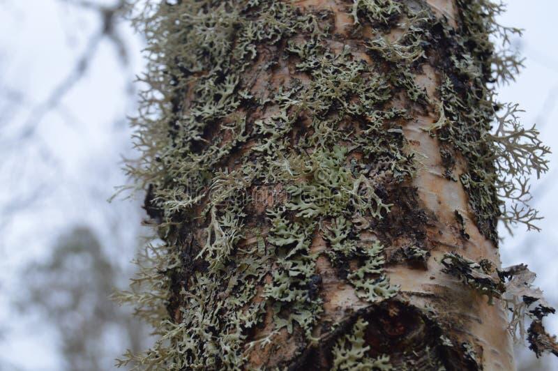Härligt bevuxet träd i skogen arkivfoto