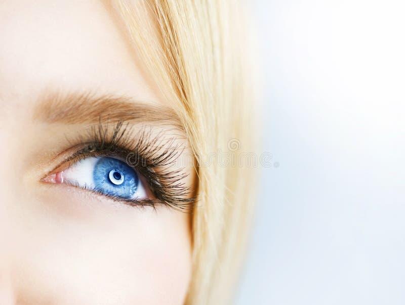 härligt blått öga fotografering för bildbyråer