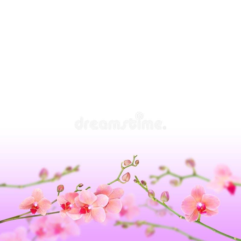 härligt blom- för abstrakt bakgrund arkivfoton