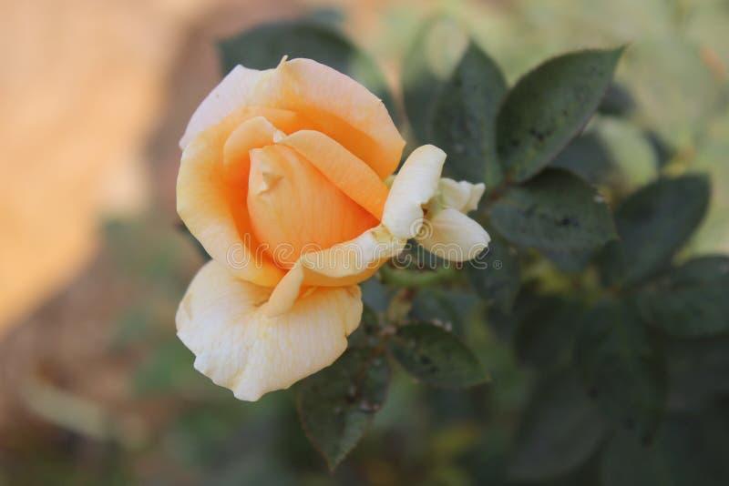 Härligt blommafoto för landskap i trädgård royaltyfri fotografi