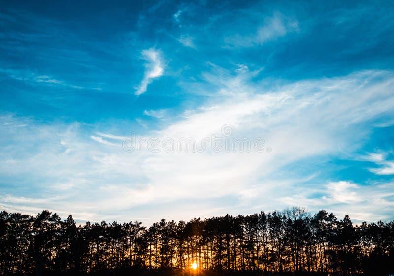 Härligt brett skott av konturn av träd under en klar blå himmel med moln under guld- timme royaltyfria bilder