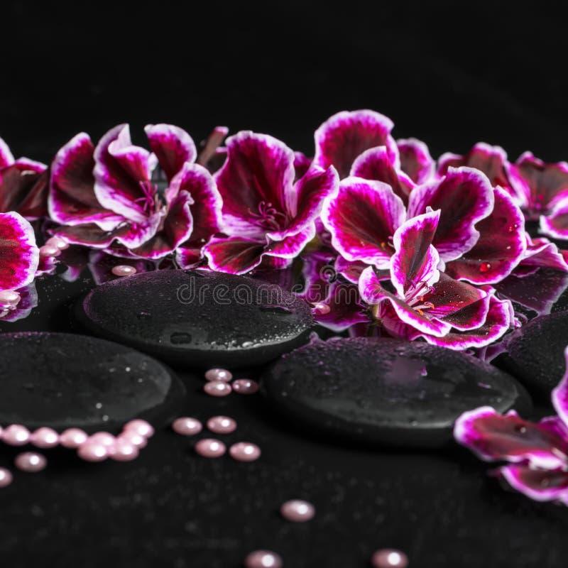 Härligt brunnsortbegrepp av pelargonblomman, pärlor och svart zenst arkivbilder