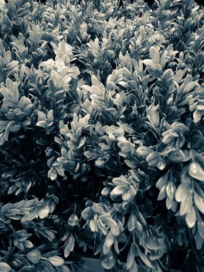 Härligt closeupträdblad eller att lämna illustrationvit och svart färg dekorativa växter i trädgården royaltyfria bilder