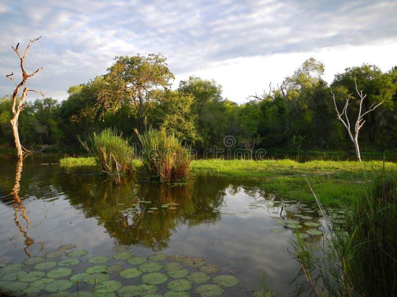 Härligt damm i hjärtan av savannahen, Kruger nationalpark, SYDAFRIKA fotografering för bildbyråer