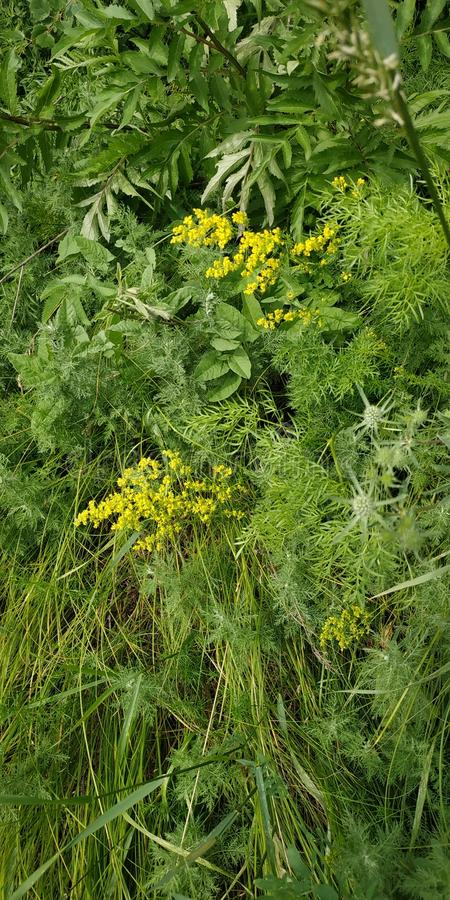 Härligt djurliv, gräs och blommor arkivfoton