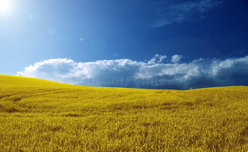 härligt fält arkivbild