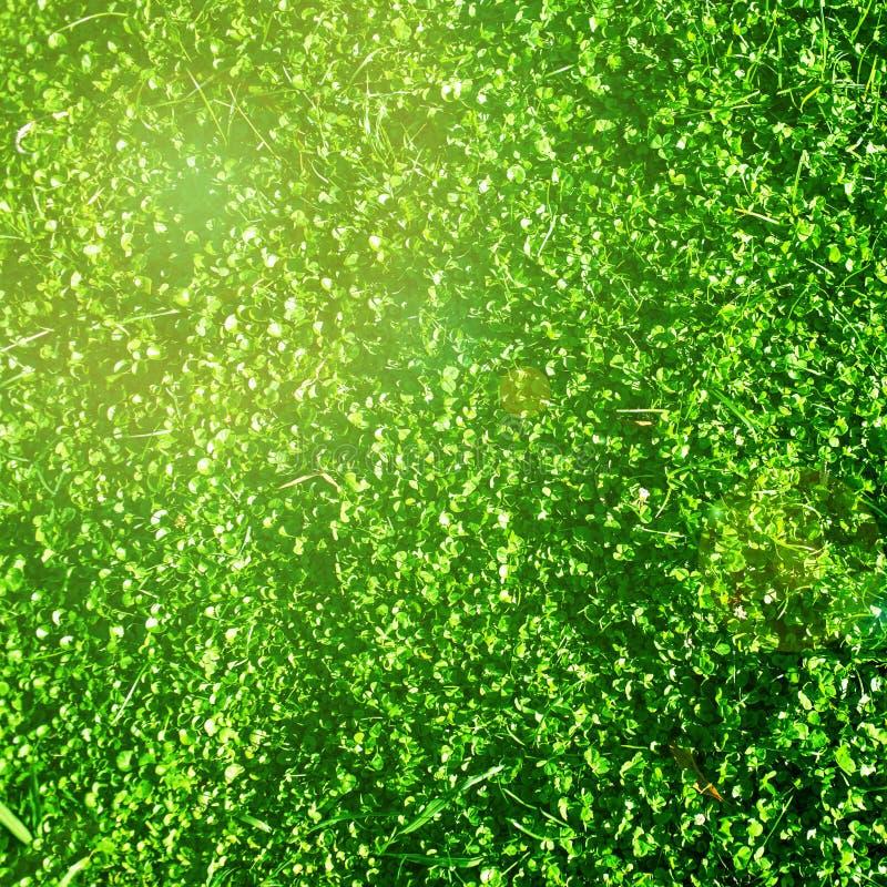 Härligt fält med grönt gräs som landskap Påsk vår, arkivfoton