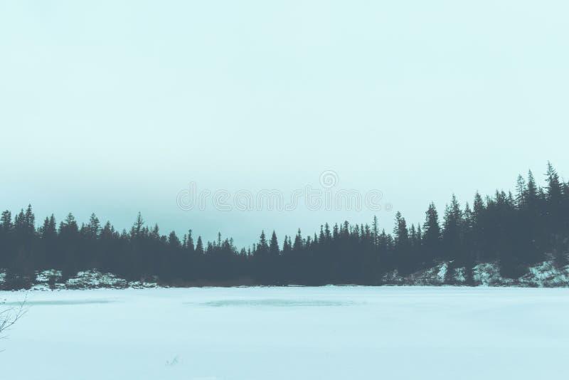 Härligt fält som täckas i snö med en skog i bakgrunden arkivbilder