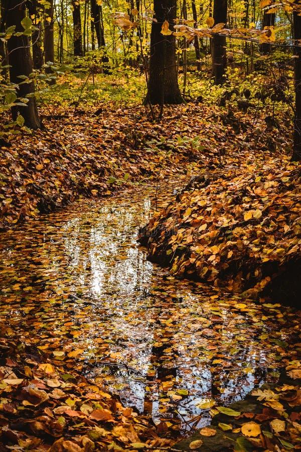 Härligt färgrikt landskap med en ström och en skog i höstfärger Sen höst Jaga royaltyfri fotografi