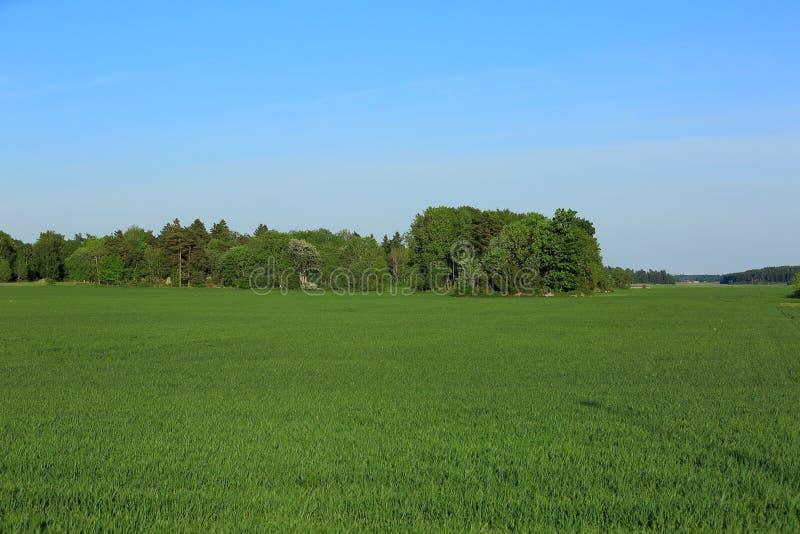 Härligt färgrikt naturligt landskap, grönt fält och träd på bakgrund för blå himmel arkivfoto