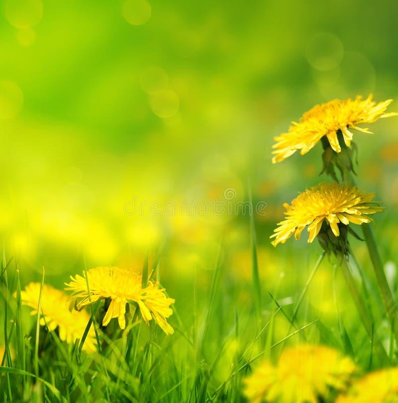 Härligt fjädra blommabakgrund royaltyfria foton