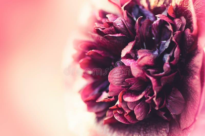 Härligt fjädra blommabakgrund Härlig suddighet bakgrund royaltyfria foton
