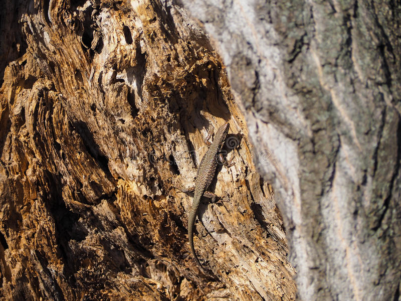 Härligt foto av ödlan i träd arkivfoton
