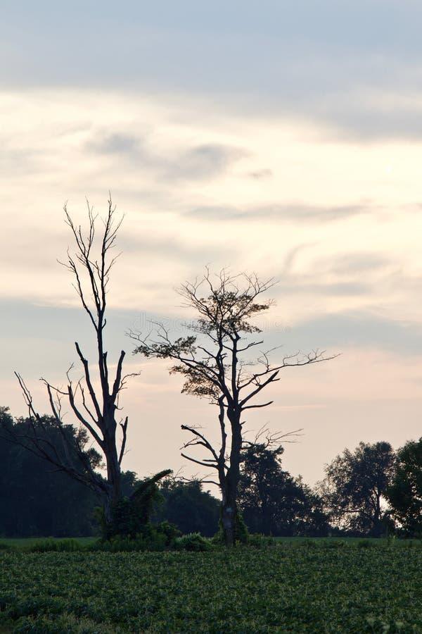 Härligt foto av fantastiska gamla träd royaltyfri foto