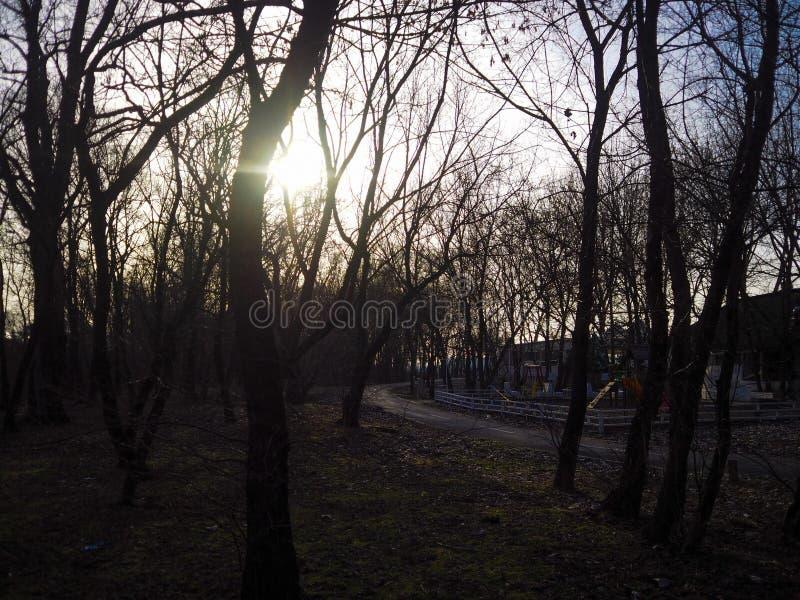 Härligt foto av träd arkivfoto