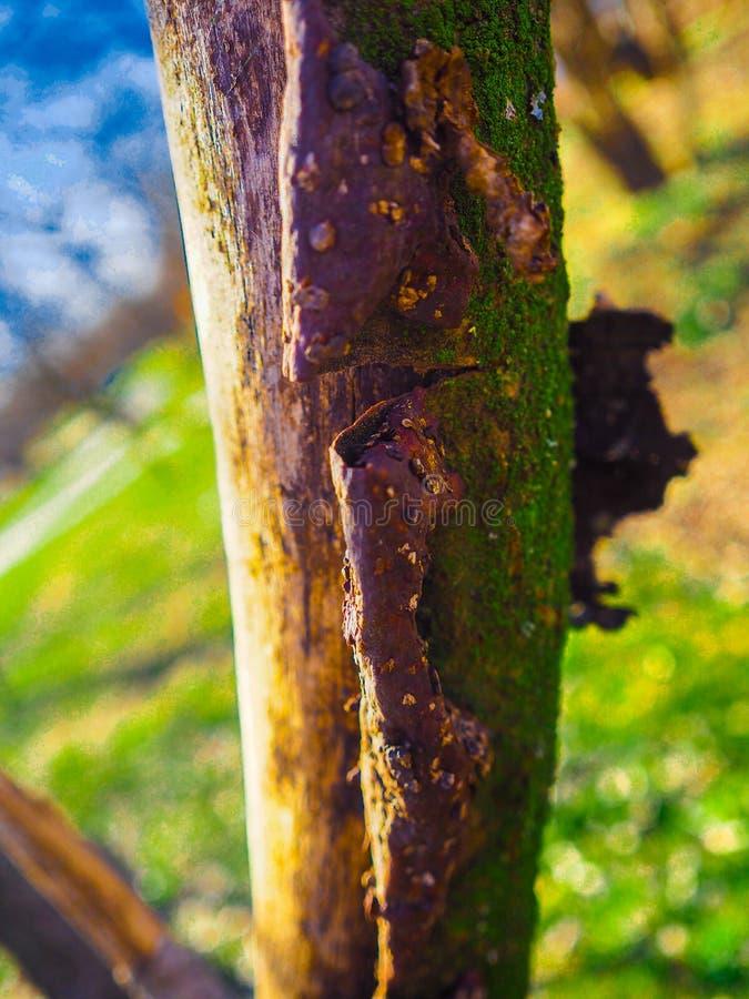 Härligt foto av trädet royaltyfria foton