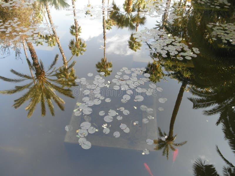 Härligt gömma i handflatan refleten i vattnet royaltyfria foton
