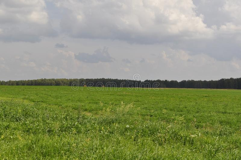 Härligt grönt fält i bakgrunden av skogen arkivbilder