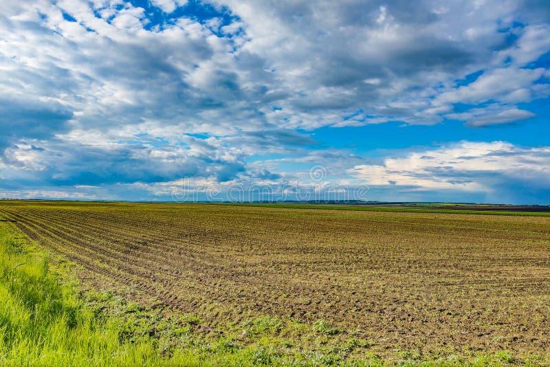 Härligt grönt ungt fält och bred molnig himmel på en klar solig dag Naturlig landskapbygdplats sceniskt royaltyfria foton