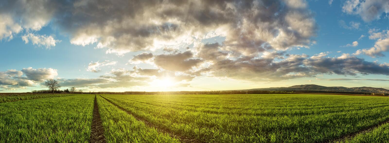 Härligt grönt vetefält med sagolika moln royaltyfria bilder