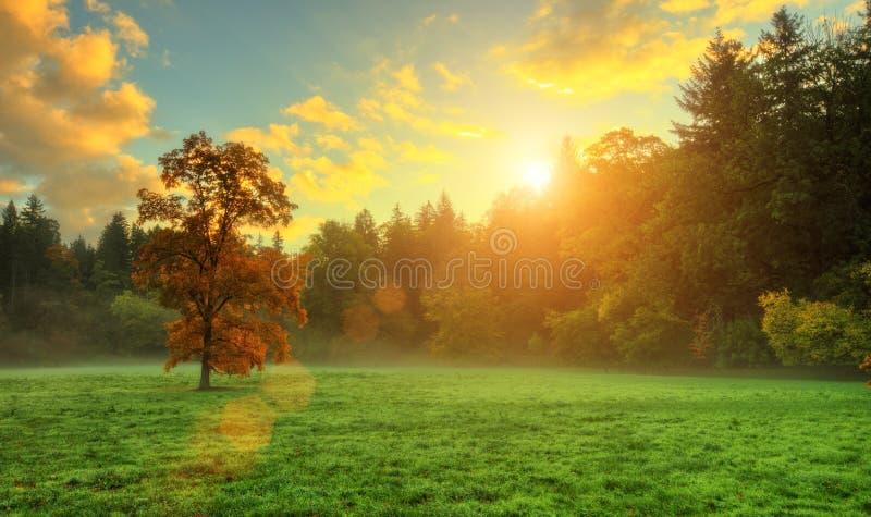 Härligt guld- kulört höstträd i äng fotografering för bildbyråer