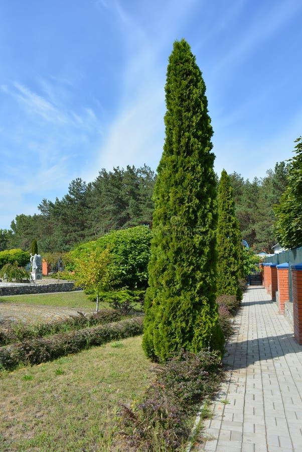 Härligt högväxt thai i trädgården nära kyrkan med trålspåret, parkeraområdet royaltyfri foto