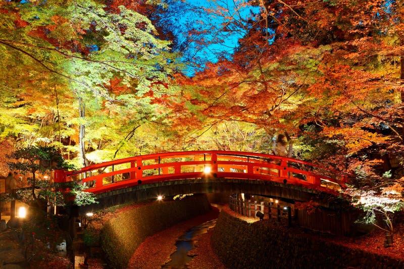 Härligt höstlandskap av brännheta lönnträd i en japanträdgård i Kitano Tenmangu Shrine royaltyfria foton