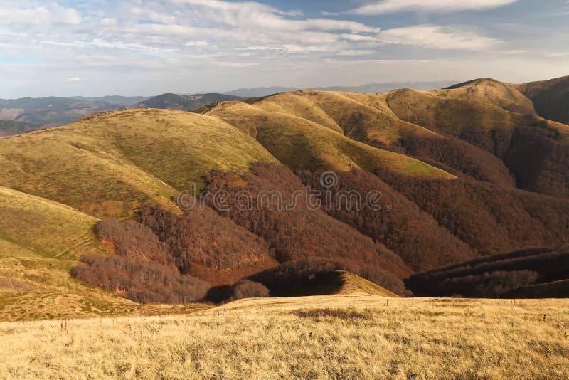 Härligt höstlandskap för Carpathian berg Gräs är en guld- färg Skog royaltyfri fotografi