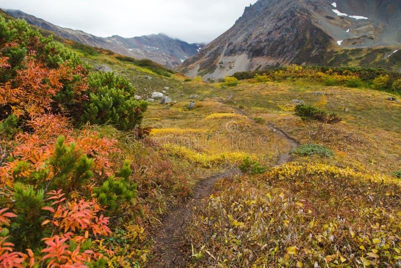 Härligt höstlandskap i berg i Kamchatka arkivfoto