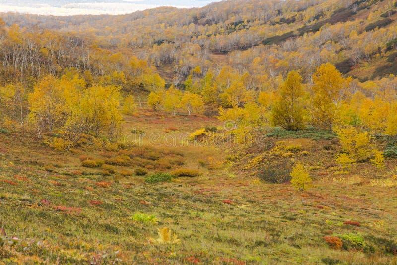 Härligt höstlandskap i berg i Kamchatka royaltyfri fotografi