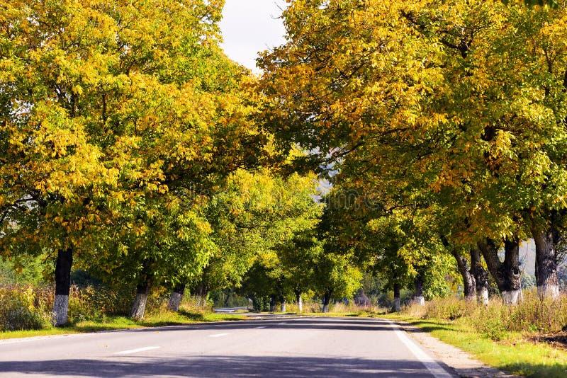 Härligt höstlandskap med gula och bruna sidor arkivfoto