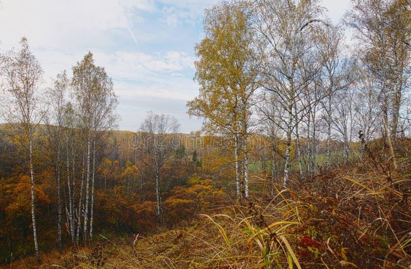 Härligt höstlandskap med träd för för dödbruntgräs och björk fotografering för bildbyråer
