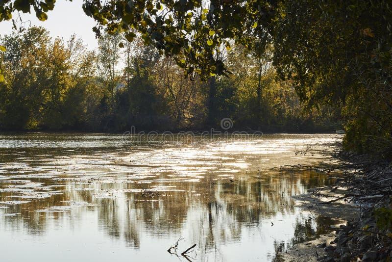 Härligt höstlandskap med träd som lutar över en sjö under färgrik solnedgång royaltyfria bilder