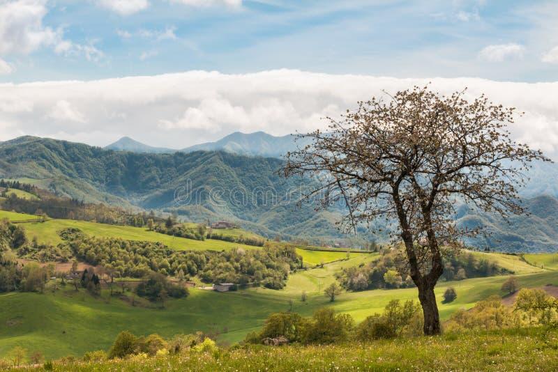 Härligt italienskt bygdlandskap över Rolling Hills och B royaltyfri foto