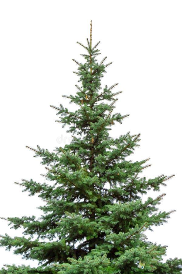 Härligt julträd på en vit bakgrund royaltyfri fotografi