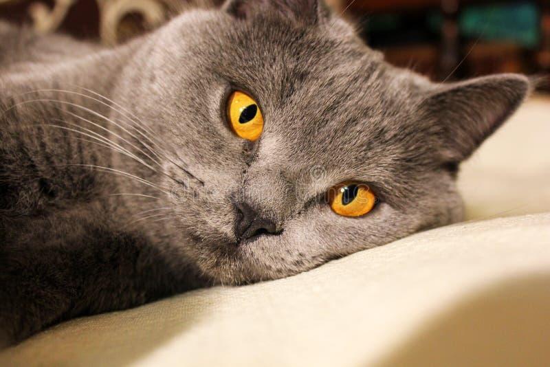 Härligt kattslut upp fotografering för bildbyråer