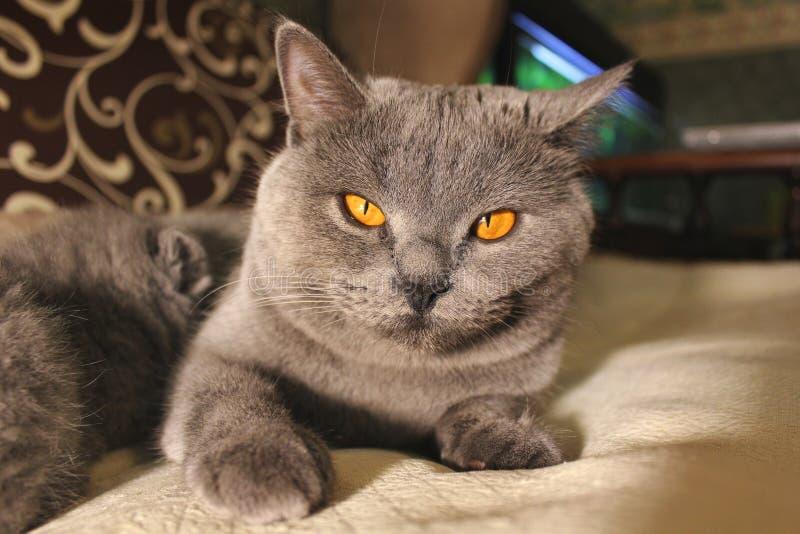 Härligt kattslut upp royaltyfri bild