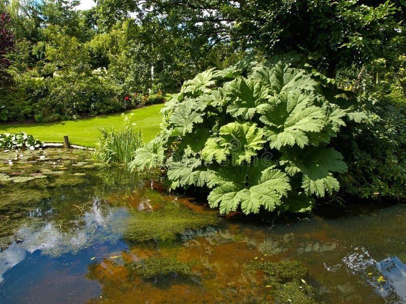 Härligt klassiskt damm för designträdgårdfisk med näckrons royaltyfri foto