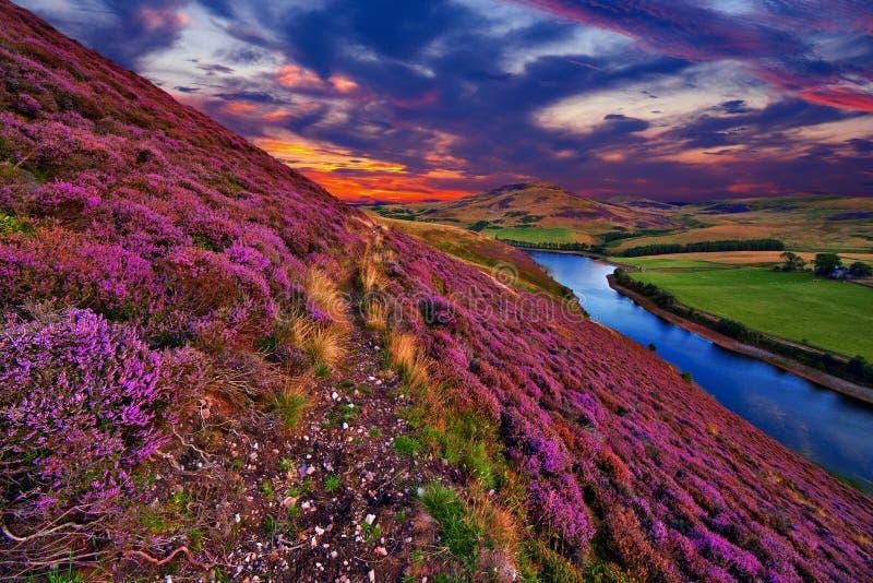 Härligt landskap av den skotska naturen royaltyfri bild