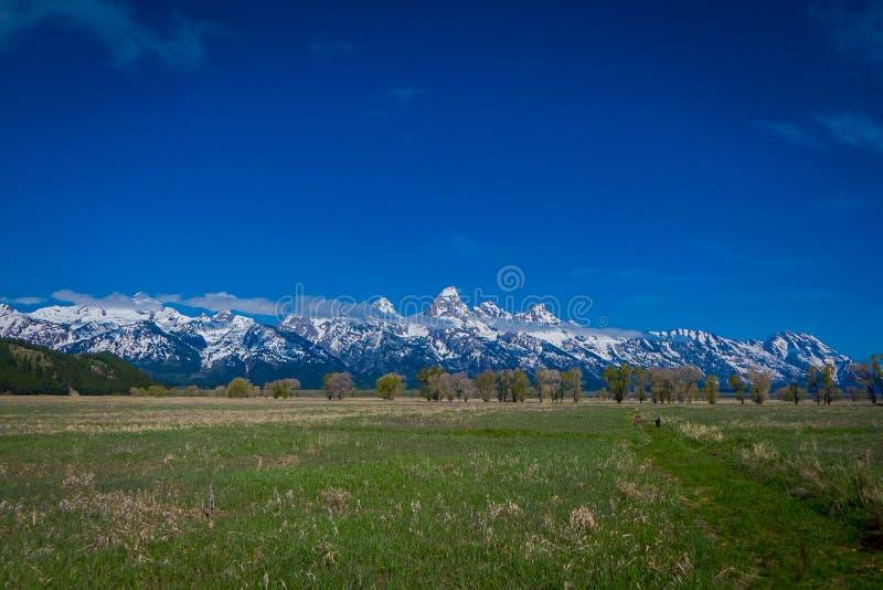 Härligt landskap av det storslagna Tetons området och maxima som lokaliseras inom den storslagna Teton nationalparken, Wyoming, m royaltyfri fotografi